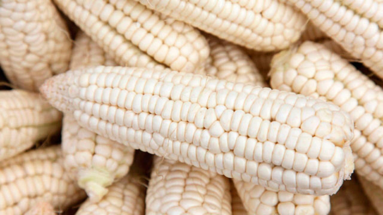 Baja costo del maíz blanco y quita presión al precio de las tortillas