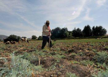 60102027. Alcoman, 2 de Enero 2016. (Notimex- Pedro Sánchez).-Los hombres de campo no abandonan sus labores, desde los primeros días del año continúan con sus jornadas agrícolas, en el Estado de México. NOTIMEX/FOTO/PEDRO SÁNCHEZ/PSM/COR/HUM